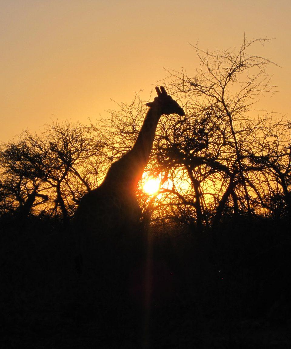 Raid 4x4 himbas etosha namibie 040